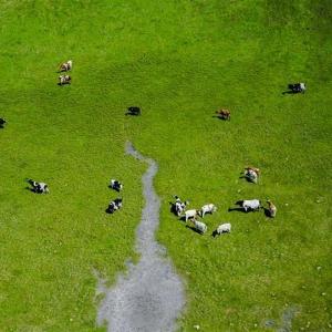 呼伦贝尔大草原的夏日