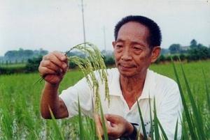 1149.02公斤!袁隆平团队超级杂交稻亩产创世界新纪录